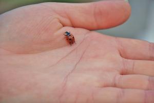 ladybug-169943_1280
