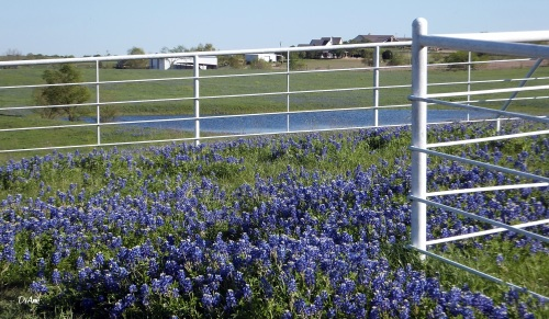 Southern trial fence and BB