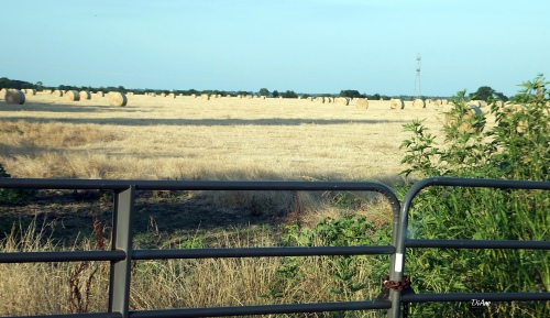 Fence and bales